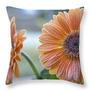 Frosted Gerberas Throw Pillow