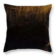 Frosted With Sun Throw Pillow