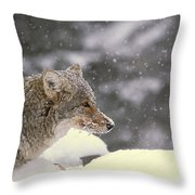 Frosty Coyote Throw Pillow