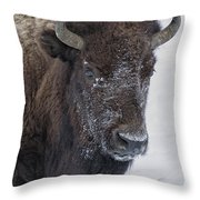 Frosty Morning Bison Throw Pillow