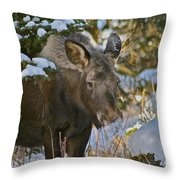 Frosty Nose Throw Pillow