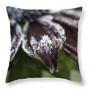 Frosty Rudbeckia Throw Pillow