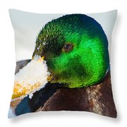 Mallard On Ice Throw Pillow
