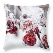 Frozen Crab Apples On Snowy Branch Throw Pillow