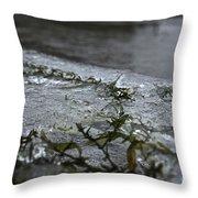 Frozen Milfoil Throw Pillow