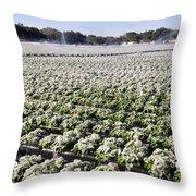 Frozen Strawberries Work B Throw Pillow