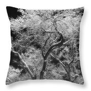 Frozen Trees Throw Pillow