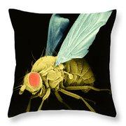 Fruit Fly Sem Throw Pillow