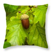 Fruit Of An Oak Tree Ripe In Autumn Throw Pillow