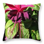 Fuchsia Named Roesse Blacky Throw Pillow