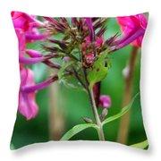 Fucia  Tubular Flowers Throw Pillow