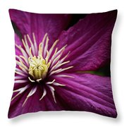 Full Bloom Clematis  Throw Pillow