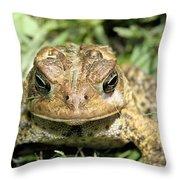 Full Frontal Throw Pillow