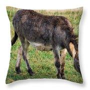 Full Grown Donkey Grazing Throw Pillow