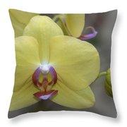 Fuller's Sunset Orchid Throw Pillow