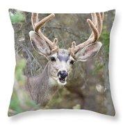 Funny Mule Deer Buck Portrait With Velvet Antler Throw Pillow