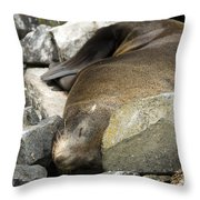 Fur Seal Throw Pillow