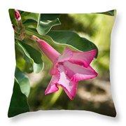 Fushia Oleander Near Phoenx Arizona 1 Throw Pillow by Douglas Barnett