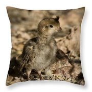 Fuzzball  Throw Pillow