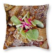Fuzzy Plant On Blue Mesa Trail In Petrified Forest National Park-arizona  Throw Pillow