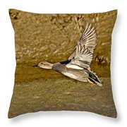 Gadwall Drake In Flight Throw Pillow