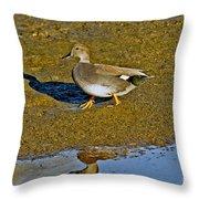 Gadwall Drake On Mudflat Throw Pillow