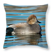Gadwall Duck Drake Swimming Throw Pillow