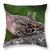 Galapagos Dove Galapagos Islands National Park Santa Cruz Island Throw Pillow