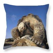 Galapagos Giant Tortoise Mating Alcedo Throw Pillow