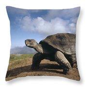 Galapagos Giant Tortoise On Alcedo Throw Pillow