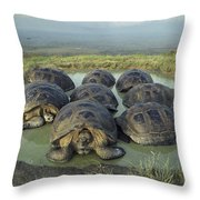 Galapagos Giant Tortoises Wallowing Throw Pillow
