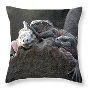 Galapagos Islands 09 Throw Pillow