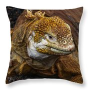 Galapagos Land Iguana  Throw Pillow by Allen Sheffield