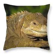 Galapagos Land Iguana Isabella Island Throw Pillow