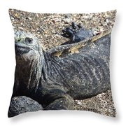 Galapagos Marine Iguana Throw Pillow