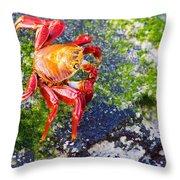 Galapagos Sally Lightfoot Crab Throw Pillow