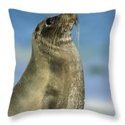 Galapagos Sea Lion Coral Beach Throw Pillow