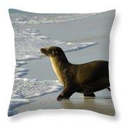 Galapagos Sea Lion In Gardner Bay Throw Pillow