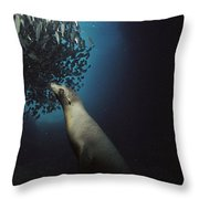 Galapagos Sea Lion Pup Fishing Throw Pillow