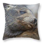 Galapagos Sea Lion Sleeping Throw Pillow