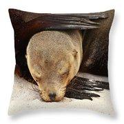 Galapagos Sea Lion Throw Pillow