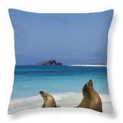 Galapagos Sea Lions On Beach Galapagos Throw Pillow