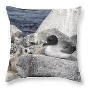 Galapagos Seagull And Her Chick Throw Pillow