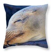 Galapagos Sealion Throw Pillow