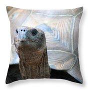 Galapagos Tortoise 1 Throw Pillow