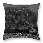 Galapagos Tortoise Baby Throw Pillow