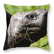 Galapagos Tortoise Galapagos Islands National Park Santa Cruz Island Throw Pillow