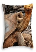Galapagos Tortoise Throw Pillow