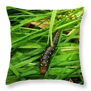 Gallium Sphinx Caterpillar Throw Pillow