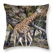 Galloping Giraffe  Throw Pillow